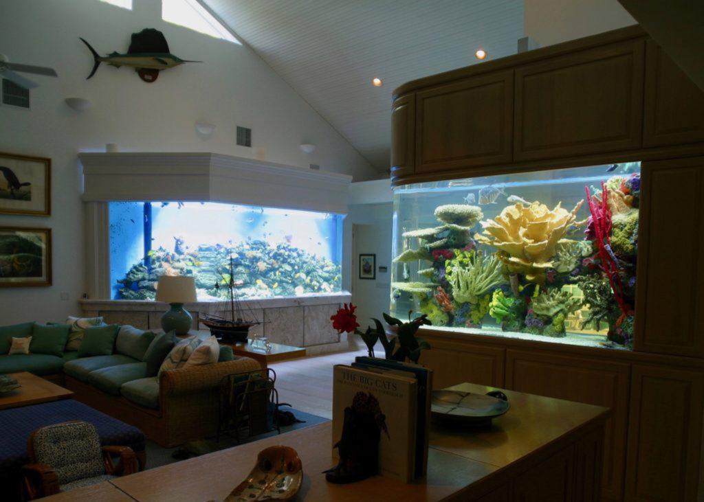 Jones-Keys-Reef-front-fish-right-2-1-1024x731